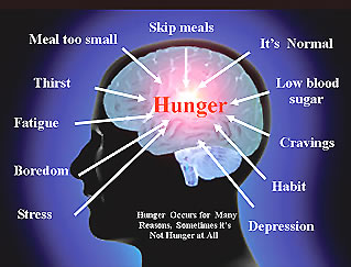 Causes of Hunger in the Brain