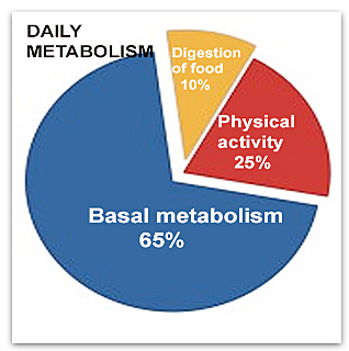 discovering your metabolism for fast weight loss
