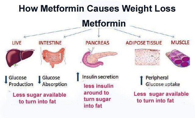 fasting diet with metformin