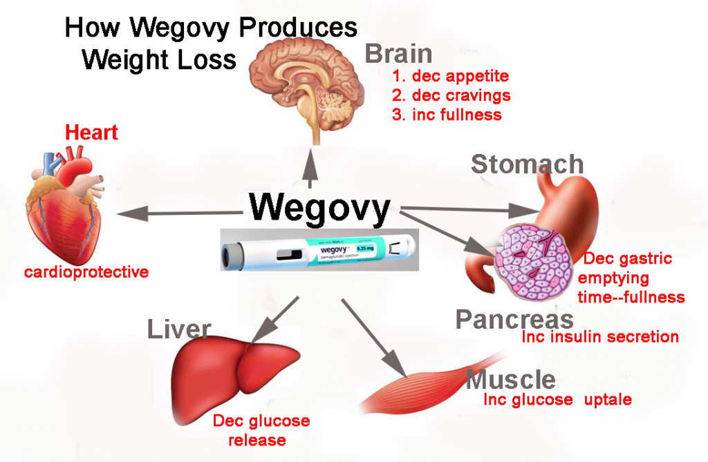 wegovy new weight loss medication